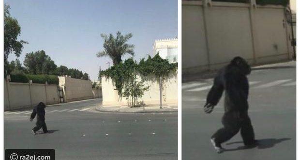 صور: غوريلا في شوارع الرياض.. تعرف على التفاصيل