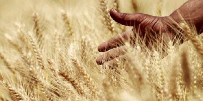 الكشف عن حقيقة حظر استيراد 7 محاصيل مصرية