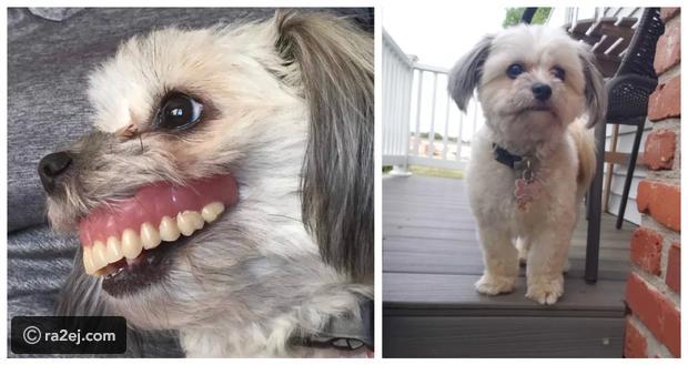 صور: كلبة لطيفة تتحول إلى وحش بأغرب طريقة ممكنة