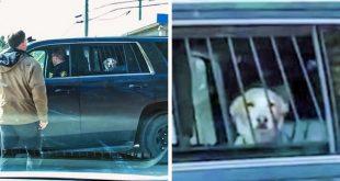 الحيوانات أيضًا تواجه أيامًا صعبة مثلنا!