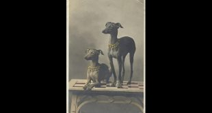 صور: شاهد كيف تغيرت ملامح سلالات الكلاب على مر الزمن