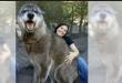 """صورة كلب عملاق تُحقّق انتشارًا واسعًا على """"إنستغرام"""" في أميركا"""