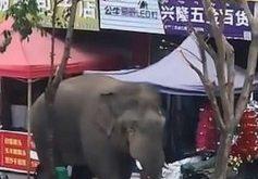 فيل هائج يتجول في بلدة هندية ويقلب السيارات ويلقيها بخرطومه