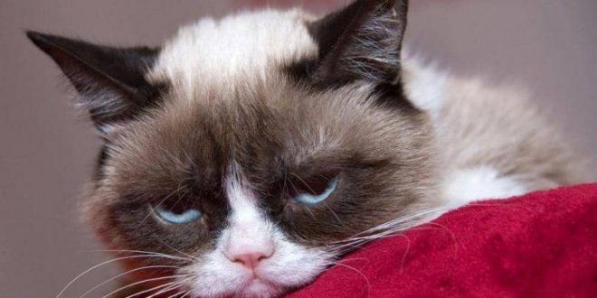 """وفاة القط """"المليونير الغاضب"""" تاركًا ثروة ضخمة"""