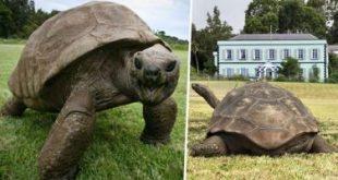 تعرف على أقدم حيوان يعيش على كوكب الأرض