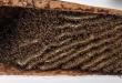 أمريكى يعثر على ما يقرب من 100 ألف نحلة فى سقف منزل اشتراه حديثا