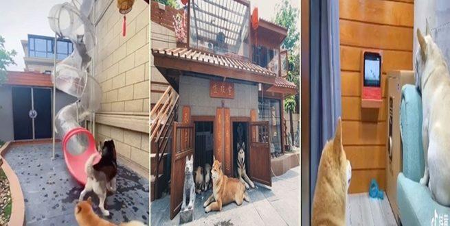صيني يبني قصرا فاخرا لكلابه بمبلغ باهظ