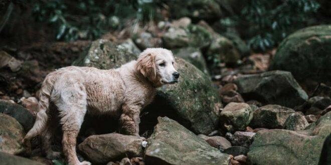 ذهبوا من أجل إنقاذ حيوانات.. ليكتشفوا مأساة إنسانية