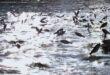 ظاهرة غريبة.. مئات الأسماك تقفز من بحيرة فى الصين وتفاجئ الزوار