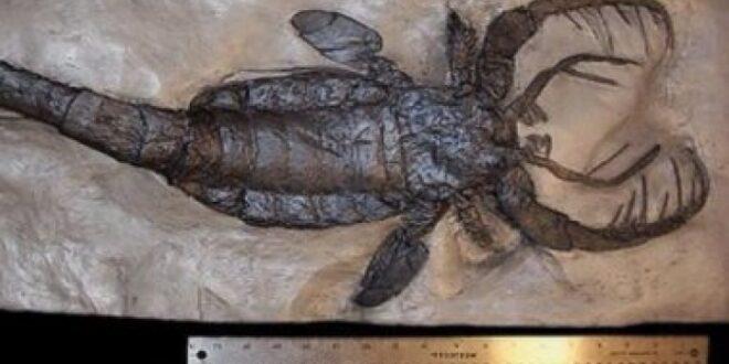 ضخمة ومرعبة.. علماء يكتشفون نوعا من العقارب البحرية يصل طولها 2.5 متر