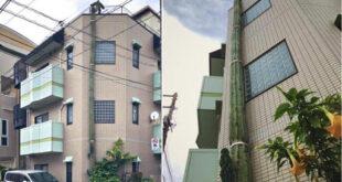 نبات صبار بطول عمارة سكنية يسعى لدخول موسوعة جينيس