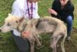 رجل يترك كلبا للموت جوعا انتقاما من زوجته بعد طلاقهما.. ونشطاء ينقذونه