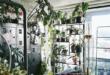 مصمم أزياء أسترالى يحول منزله إلى غابة خضراء تضم نباتات نادرة