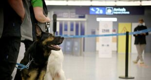 كلاب بقدرات خاصة تكتشف مصابى كورونا بمطار فنلندا بدون فحوصات