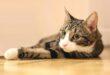 ما هى حساسية القطط وعلامات الإصابة بها