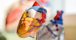 علماء يطورون رقعة قلبية تحتوى على أوعية دموية لعلاج متلازمة القلب المكسور