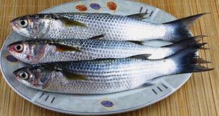 فوائد تناول السمك البورى على صحة الجسم