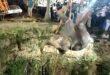 إنقاذ فيل سقط فى بئر على عمق 50 قدما بالهند