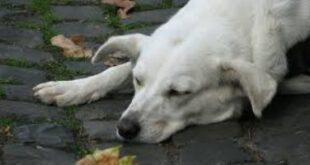 أوفى المخلوقات.. كلب ينتظر مالكه المتوفى منذ 11 عاما