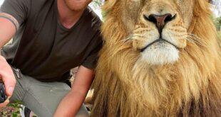 يقبل الأسود ويلعب مع النمور.. مغامر بريطانى يربى الحيوانات المفترسة بجنوب إفريقيا