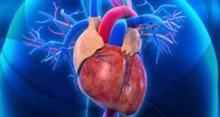 دراسة: أدوية المناعة لمرضى السرطان تزيد من إصابتهم بأمراض القلب