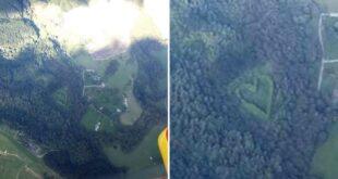 رجل نيوزيلندى يزرع مجموعة من الأشجار على شكل قلب تكريما لزوجته