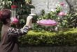 عودة للطبيعة.. كولومبية تزين حديقتها لجذب 30 نوعا من الطيور الطنانة