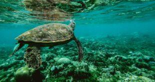 تعرف على أجمل وأهم الجزر المرجانية في العالم