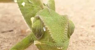 حيوان برى يرى بزاوية 360 درجة دون تحريك رأسه