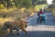 دقيقة تحبس الأنفاس .. نمر يعترض السائقين بأحد شوارع الهند
