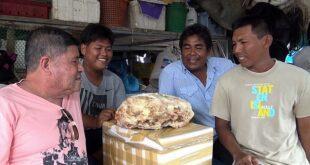 صياد تايلاندى يعثر على7 كيلو 'عنبر' بشاطئ قيمته 210 آلاف استرلينى