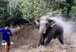 فيل غاضب يطارد موظفى غابة فى تايلاند حاولوا منعه من أكل محاصيل المزارعين