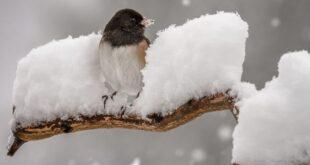 لماذا لا تتجمّد أقدام الطيور في الشّتاء؟
