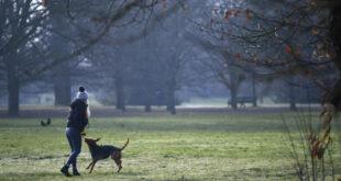 بريطانية تروى تفاصيل سرقة كلابها في ظل ارتفاع أسعارها بسبب كورونا