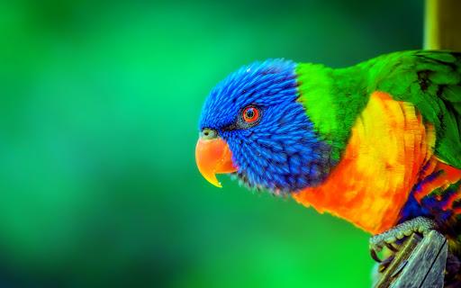 """ترى ألواناً لا يراها البشر لتتمكن من الحصول على طعامها.. لمحة داخل """"أعين"""" الطيور"""