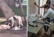 كلب وفى يمكث بجانب صديقه بعدما دهسته سيارة فى البرازيل