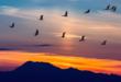 لماذا تحلق الطيور المهاجرة على شكل حرف V ؟