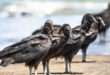 9 طيور مخيفة ستجعلك تغير نظرتك التقليدية عن لطافتها