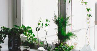 أفضل النباتات المنزلية التي يسهل الاعتناء بها!