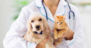 تسبَّبت في وفاة مئات الملايين.. تعرَّف على أخطر 10 أمراض وصلت إلى البشر من خلال الحيوانات
