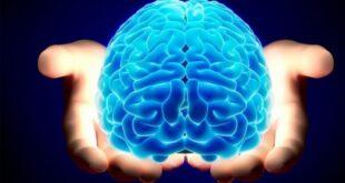 تقوية الذاكرة بطرق طبيعية،، 10 طرق لتتمتع بتركيز أفضل وذاكرة أدق