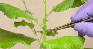 جهاز يتواصل مع النباتات ويسألها خلال أقطاب كهربائية