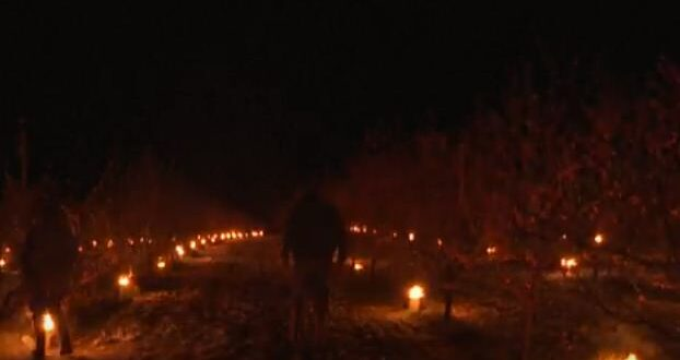 سكان بلدة فرنسية يشعلون الشموع وسط بساتين الفاكهة لتدفئتها من البرد