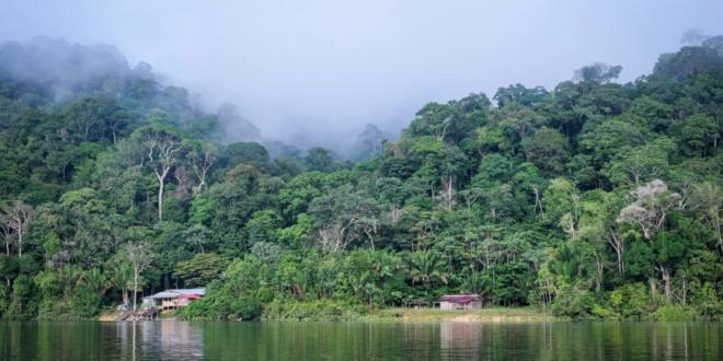 صمد وحده 38 يوماً وعاش وسط حيوانات مفترسة! طيار ينجو بعد تحطم طائرته بغابات الأمازون