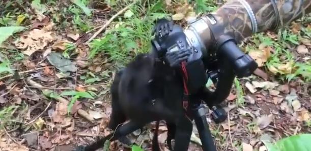 قرد يتقمص دور مصور محترف فى محمية طبيعية بإندونيسيا