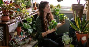 ما هي الطريقة الامثل لسقي النباتات المنزلية دون ان تودي الى الموت