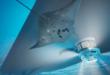يخوت المستقبل.. بها منصة للاستمتاع بالحياة البحرية تحت سطح الماء