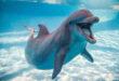 الدلافين والفيلة.. وأقوى الحيوانات ذاكرة على مر العصور