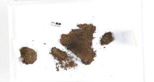 اكتشاف قطعة نسيج 11 سم تعود لعصر الفايكنج فى النرويج