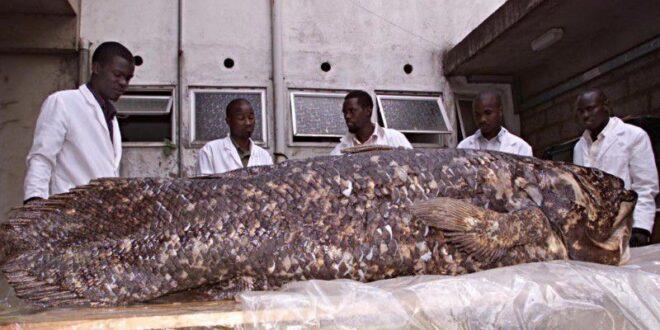 دراسة تكشف مفاجآت عن سمكة غامضة أقدم من الديناصورات.. تعيش 100 عام وصاحبة أطول فترة حمل